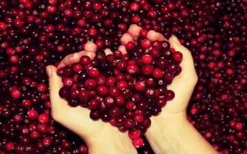 Журавлина ягода дуже корисна