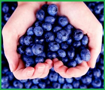 Голубика, как самая полезная ягода на земле!