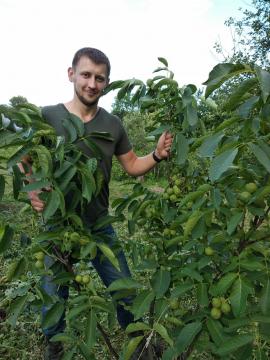Как выбрать место для посадки орехового сада?