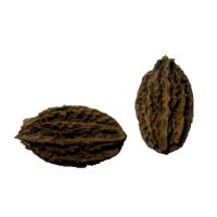Маньчжурський горіх