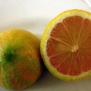 """Лимон розовый вариегатный """"Сангвинеум"""" (Citrus limon """"Foliis variegatis Sanguineum"""")"""