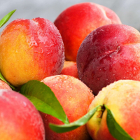 Персик Мірабель(середній термін дозрівання)